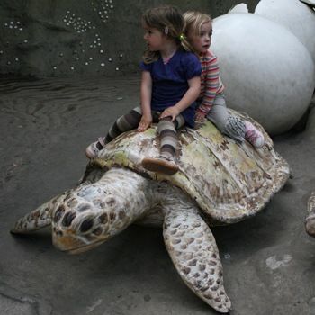 20090528Schildpad